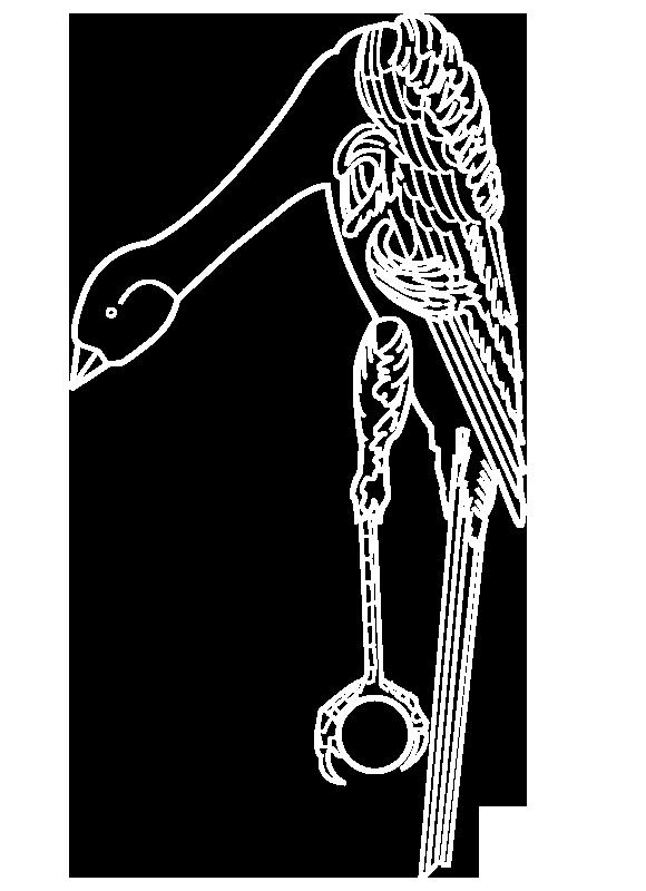 estandar giboso español dibujo 1